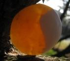 Kalcit žlutý - hmatka