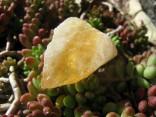 Citrín - surový kámen