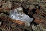 Křišťál - slon na krystalu
