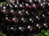 Granát almandin - náhrdelník krátký tvořený 5mm kuličkami
